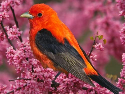 uccello colorat.jpg